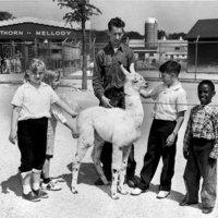 Children at Hawthorn-Mellody Farms Petting Zoo